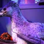 Buckbeak WB Harry Potter Studio Tour London