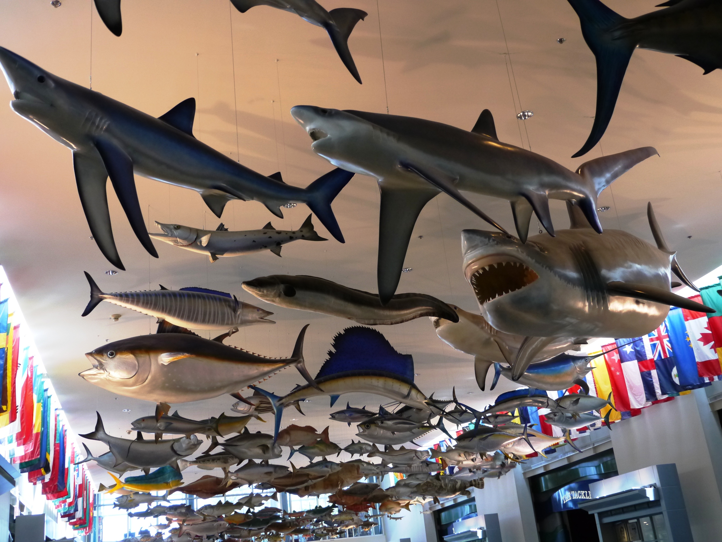 Fishing Hall of Fame Shark Trophies in Fort Lauderdale