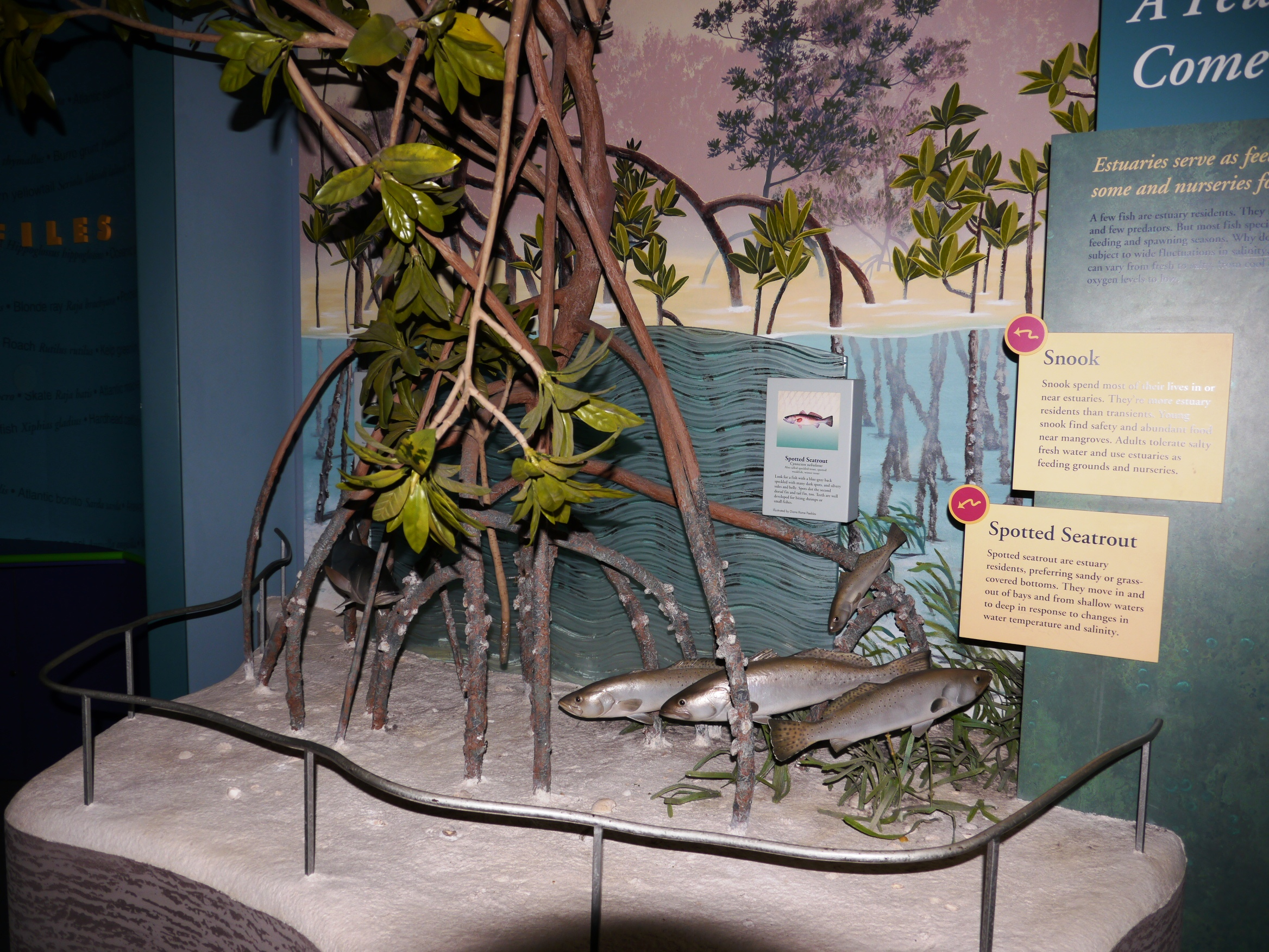 Habitats Exhibit at Fishing Hall of Fame Museum