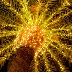 Garden of Lights Credit: Flamingo Gardens