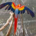 Macaw at Butterfly World