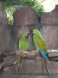 Parrots at the Palm Beach Zoo