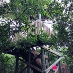 Fire Tower at Gumbo Limbo in Boca Raton