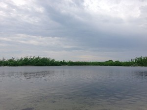 Lake Wyman at Gumbo Limbo