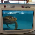 Sea Turtle Hospital at Gumbo Limbo