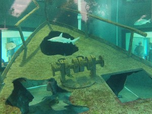 Fish Tanks at Gumbo Limbo