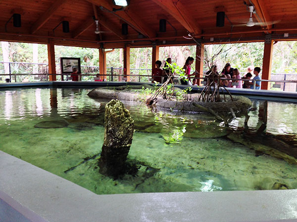 Fish Feeding at Gumbo Limbo