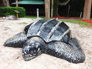 Turtles at Gumbo Limbo Review