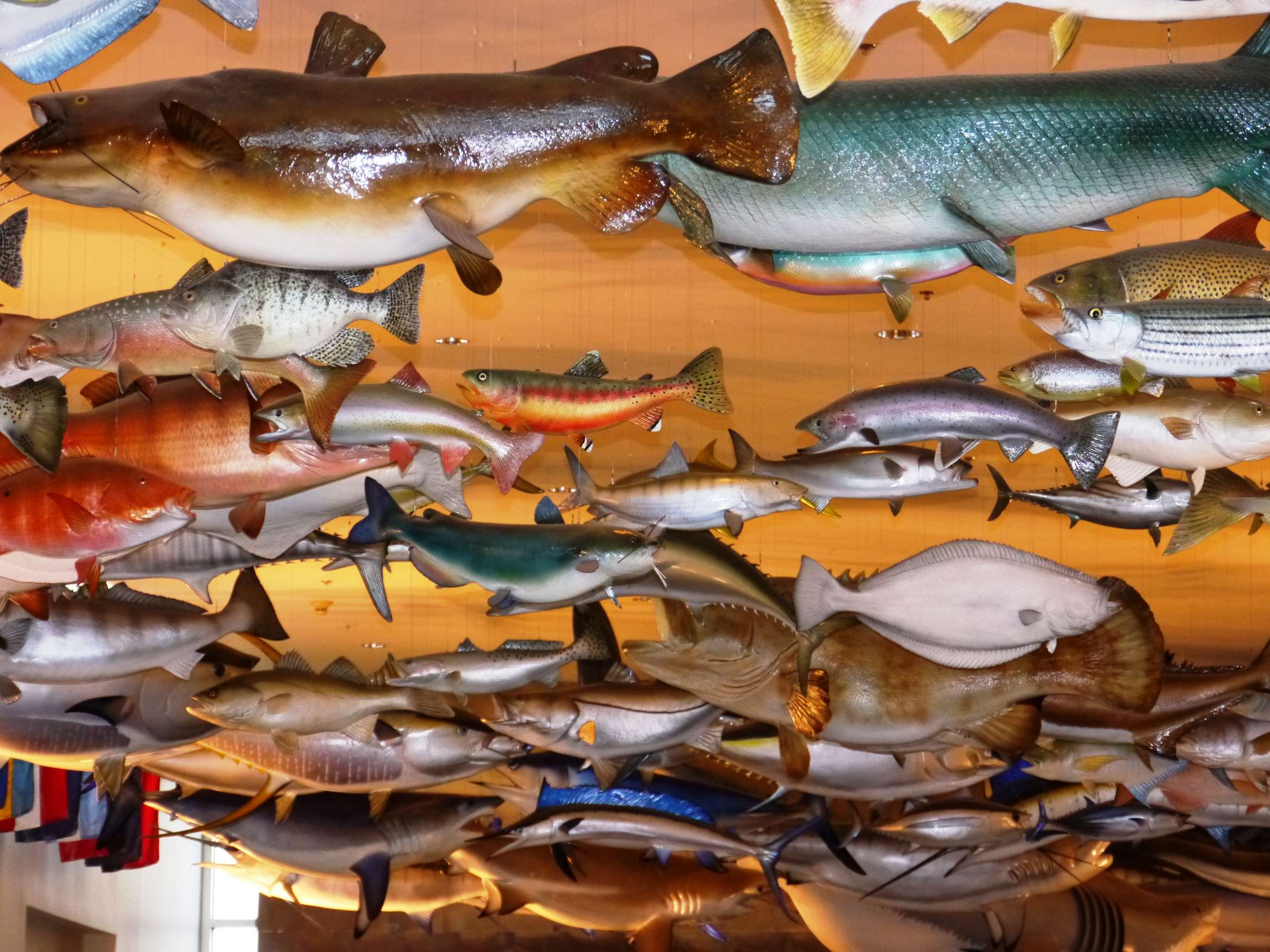 Fishing Hall of Fame Museum in Dania Beach