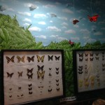 Butterfly display at Gumbo Limbo in Boca Raton